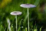 Mushrooms/Paddestoelen