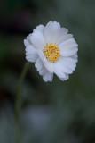 Le temps de fleurs