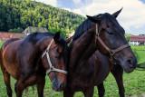 Des chevaux, une rencontre