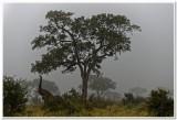 Morning Mist, Kruger National Park
