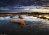 Winter Marsh