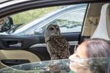 Brief Respite in the Owl-Mobile