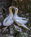 Two Lover Birds_MG_2396.jpg