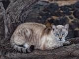 Feral Cat_DSCF7679.jpg