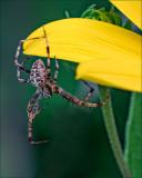 Hang on Little Fella!_DSCF5220.jpg