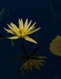 Lotus_DSCF9878.jpg