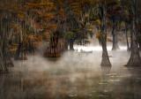 Morning Mist_MG_5105.jpg