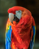 Parrot_MG_9886.jpg