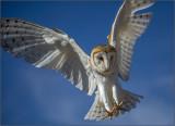 Snow Owl Landing.jpg