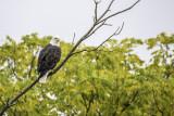 2018 Eagle near home