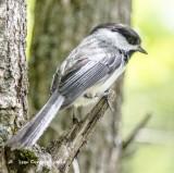 Birds of North America  -2-