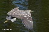 Birds of North America   -1-