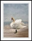 Artistic Birds...