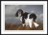 English Springer Spaniels....Charlie and Jack...