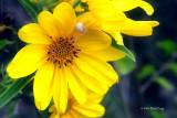 It's My Sunflower!
