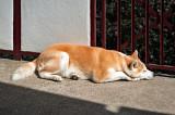 Sunshine Nap