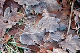 Sugar Glaze Leaves