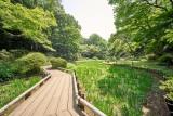 Iris garden @f8 a7