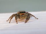 Spinnen / Spiders