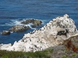 Point Lobos State Natural Reserve, California, August 2002