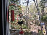 Hummingbird Feeder Window Bracket