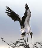Florida Water Birds