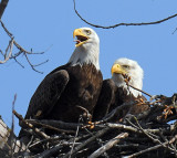 Guarding the Nest_5188.jpg