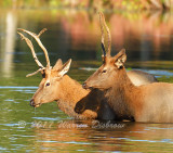 Elk_8165_01.jpg