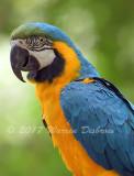 Macaw_7597.jpg