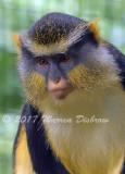 Monkey_7531.jpg