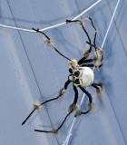 Spider_3380.jpg