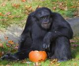 Chimp_2103.jpg