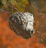 Hornet Nest_1233.jpg