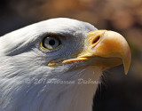 Eagle_0572.jpg
