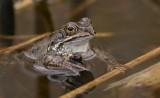 Reptielen en amfibieën (Reptiles and Amphibians)