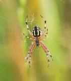 Spinnen (Spiders)