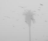Birds in Flight on a Foggy Day
