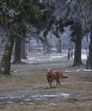 Georgie in November Frost