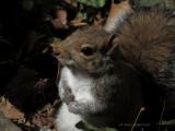 Young Squirrel near my front door.