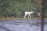 Montezuma National Wildlife Refuge Seneca Falls, NY