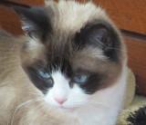 Lilicat Closeup