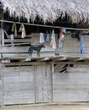 clothesline and dog Embera Village
