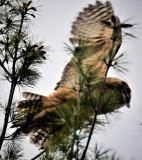 Flying  Owlette