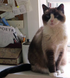 Lilicat Poetry