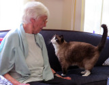 Speaking Cat!