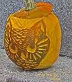 The Cat Pumpkin!