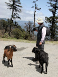 Peter at a Roadside Chorten with two goats