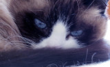 Martha's Lilicat!