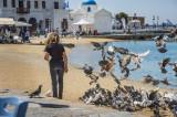 Mykonos pigeons