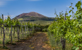 Mount Vesuvius vineyard